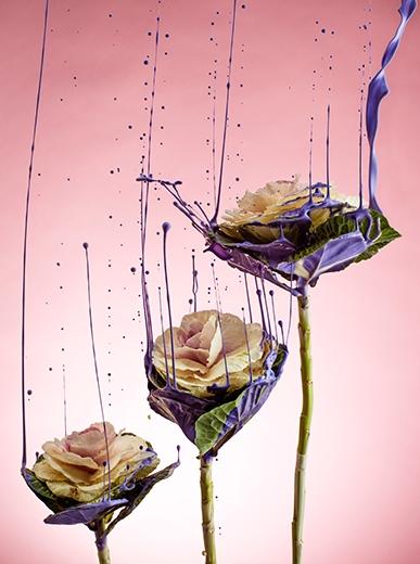 Flowergasm | Billy Plummer | Still Life Styling | Jo Ayling